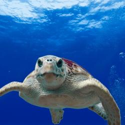 tartaruga dopo