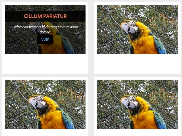 Create An Infinite Photo Gallery with jQuery and Ajax
