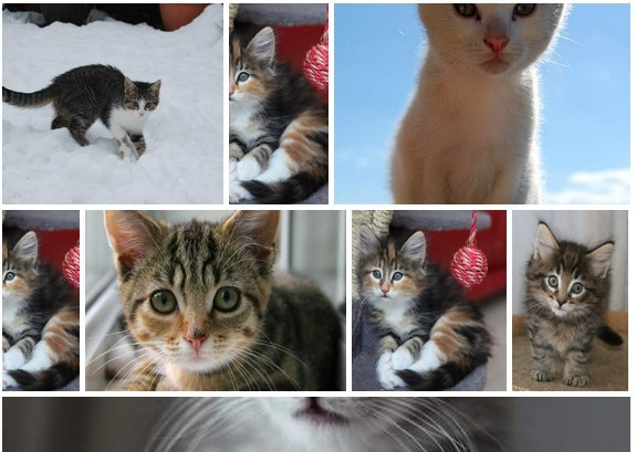 Responsive Grid Laytout-Like Gallery Plugin For jQuery - Balanced Gallery