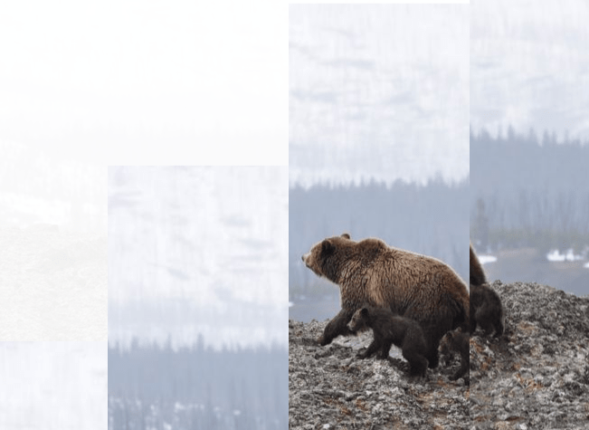Divide an Image with CSS Vars