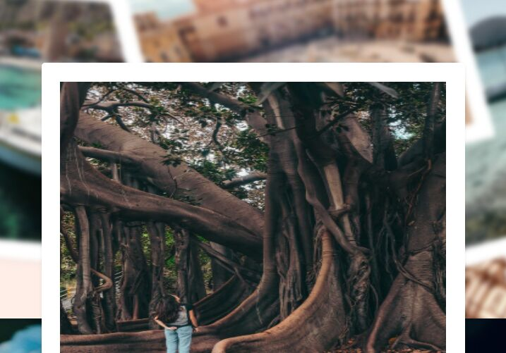 Interactive Polaroid Photo Gallery With jQuery And SCSS