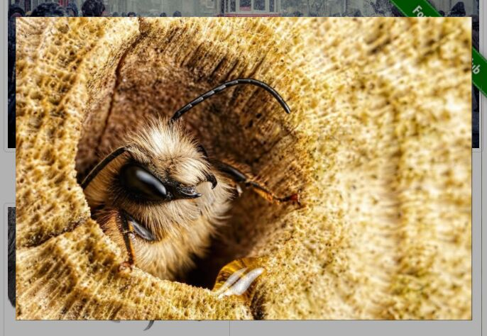jQuery Plugin For Image Lightbox with Zoom Effect - Zoomify