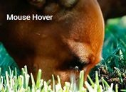 Image Zoom On Mouser Hover And Move - jQuery ZoomIt