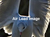 Lazy Load Images & Backgrounds As Needed - jQuery Air Load Image