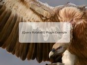 Minimal Crossfading Background Slideshow Plugin With jQuery - RotateBG
