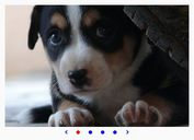 Basic Slideshow / Carousel Plugin With jQuery - Carrusel