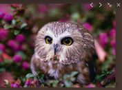 jQuery Plugin For Fullscreen Image Viewer - Chroma Gallery