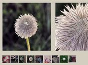 jQuery Plugin For Image Zoom On Hover - picZoomer