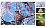 jQuery Plugin For Pretty Image Slider With Thumbnails - desoSlide