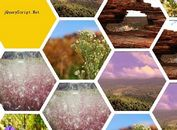 jQuery Plugin For Responsive Hexagon Grid Layout - Honeycombs