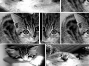 jQuery Responsive & Justified Image Gallery Plugin - Photogrid.js